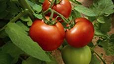 Orvego® - Poljoprivredna rešenja